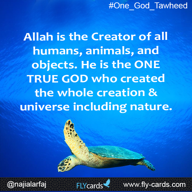 allah is the creator of humans, animals and objects
